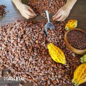 Quy trình sản xuất socola, chocolate
